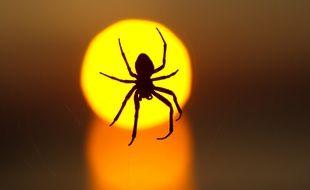 Illustration araignée.