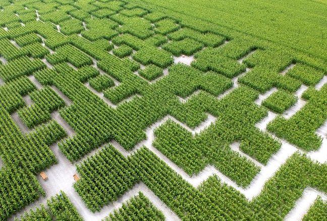 Un labyrinthe géant de maïs, de la société Pop Corn, aux Mathes (Charente-Maritime).