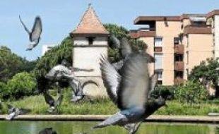 Le pigeonnier de la Reynerie reprendra du service en septembre prochain.