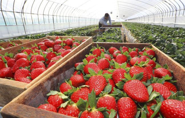 Coronavirus en Nouvelle-Aquitaine : Malgré le manque de saisonniers étrangers, les agriculteurs réussissent « à bien vivre la saison des récoltes »