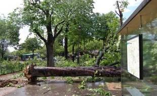 «Les premiers oragesont éclatédans l'après-midi en Ile-de-France, et notamment près de la Porte d'Auteuil à Paris, où de violentes bourrasques ont déraciné plusieurs arbres», nous écrit un internaute, Ludovic.