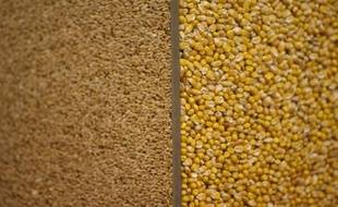 """La facture mondiale des importations alimentaires """"pourrait passer le cap des mille milliards de dollars en 2010"""", ce qui affectera d'abord les pays pauvres, selon la FAO, qui appelle la communauté internationale à """"se préparer à de nouveaux chocs""""."""
