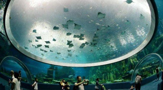 VIDEO. Une ville sous la mer, le projet à 20 milliards d'une entreprise japonaise