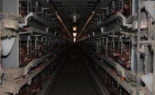 Cette fois-ci, c'est un élevage de 138.000 poules à Henanbihen, près de Lamballe (Côtes d'Armor) qui se retrouve dans le collimateur de L214.