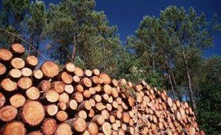 Se chauffer aux résidus de pin des Landes est une pratique qui devrait se démocratiser, selon les organisateurs du salon Forexpo