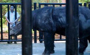 Des rhinocéros de Sumatra ont été filmés sur la partie indonésienne de l'île de Bornéo, où on les croyait disparus, relançant l'espoir pour cette espèce en très grand danger, a indiqué mercredi le WWF.
