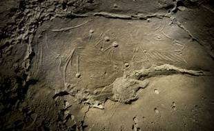 Le bison aux cupules, seulement visite dans la partie interdite de la grotte de Niaux jusqu'à présent.