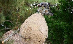 Le drone chasseur de nids de frelons asiatiques