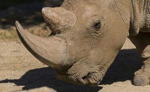 Photo non datée fournie le 16 décembre 2014 par le zoo de San Diego, en Californie, montrant Angalifu, un rhinocéros blanc du Nord mâle, mort deux jours plus tôt