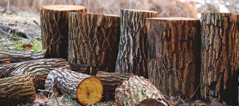 Des arbres coupés.