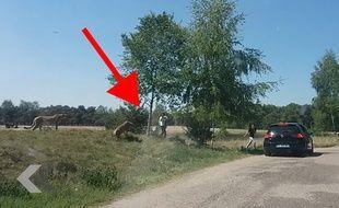 Ils se font attaquer par des guépards en plein safari ! - Le Rewind (video)