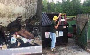 Un homme sauve 23 ratons laveurs, coincés dans une poub