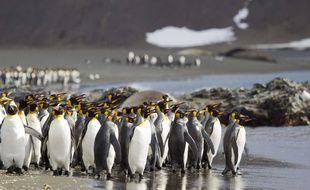 Un père a effectué un voyage aux Iles Sandwich et un en Antarctique pour photographier un manchot en hommage à sa fille