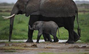 Le Mozambique abritait environ 15.000 éléphants il y a cinq ans. Mais ils pourraient disparaître dans les dix ans si aucune mesure sérieuse n'est prise pour combattre les braconniers, préviennent des défenseurs de l'environnement qui estiment que l'Afrique du Sud voisine pourrait être touchée ensuite.