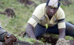 Un millier d'arbres ont été plantés au Kenya en 2007, à l'occasion de la Journée de la Terre.