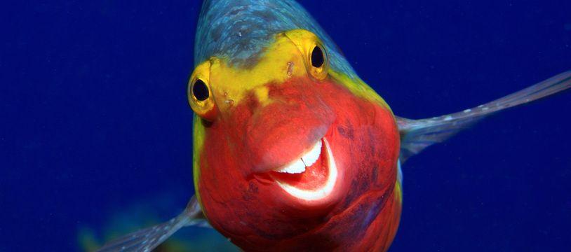 Smiley, El Hierro, Iles Canaries.