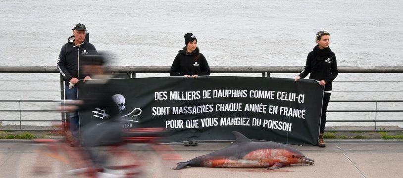 Des militants de Sea Shepherd exposent un dauphin mort pour sensibiliser le public, le 9 février 2020.