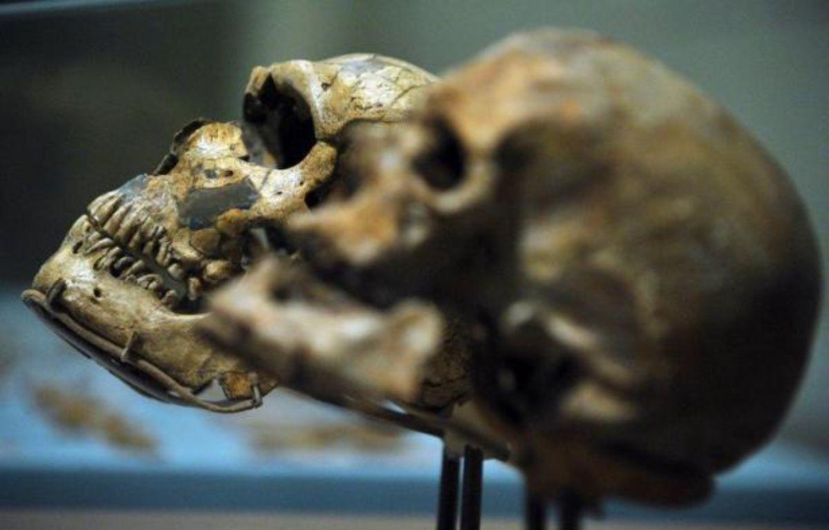 Si l'être humain a développé un cerveau aussi gros au fil du temps, c'est peut-être bien parce qu'il a été contraint de coopérer avec ses semblables et a donc appris à travailler en équipe, selon une étude publiée mercredi. – Mandel Ngan afp.com