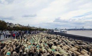 La grande transhumance est passée sur les quais de Bordeaux samedi