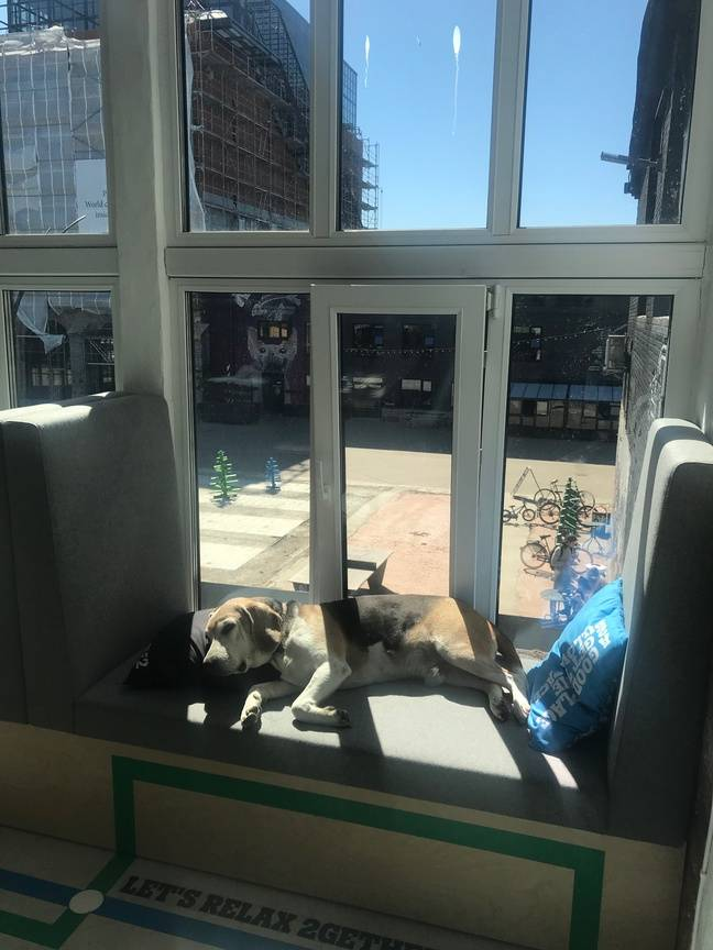 Loulou a trouvé son coin à Liftt 99, l'incubateur de start-ups du quartier de Telliskivi, dans un des « dogs offices » mis à disposition.