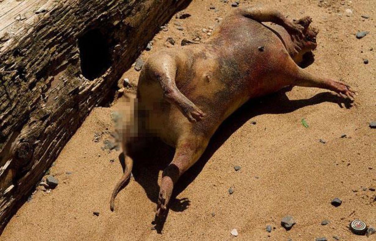 Carcasse d'un animal non-identifié retrouvé à New York le 21 juillet 2012. – Denise Ginley (creative commons)
