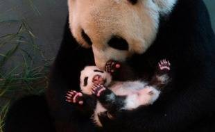 Sperme congelé de panda, banques de données génétiques ou échographie de rhinocéros: les zoos de la planète utilisent les techniques les plus élaborées pour bâtir une Arche de Noé moderne et assurer la survie des espèces menacées.