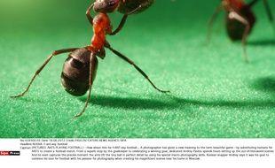 Fais comme les fourmis et joue au football