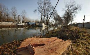 Abattage de platanes malades, touchés par le chancre coloré, le long du Canal du Midi.