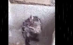 La vidéo virale de ce rongeur en train de se savonner est en fait tout sauf mignonne.