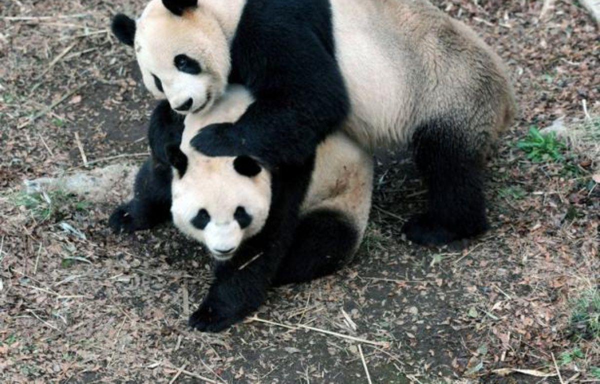 Un bébé panda géant est né dans un zoo de Tokyo, un événement salué par la Chine d'où la mère est originaire. – Ueno Zoological Park afp.com