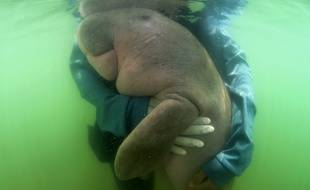 Des vétérinaires lui donnent le biberon en mer.