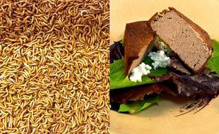 Des vers de farine transformés en C-fu.