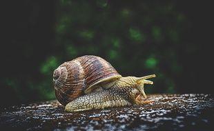 Besançon: Des escargots pour mesurer la pollution de l'environnement