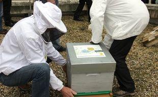 Les ruches ont été réinstallées mercredi par les apiculteurs.