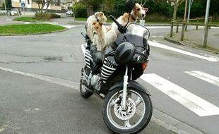 Les trois chiens avaient pris place sur la moto.