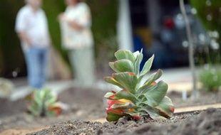 Un nouveau jardin écologique installé devant une maison de Los Angeles, le 17 juillet 2014