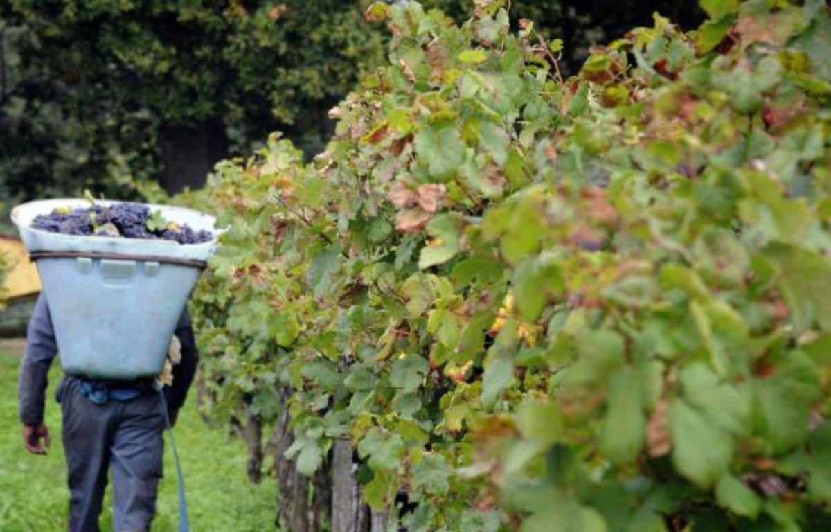 Les viticulteurs français inquiets du dépérissement des vignobles – PASCAL PAVANI AFP