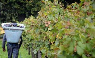 Les viticulteurs français inquiets du dépérissement des vignobles