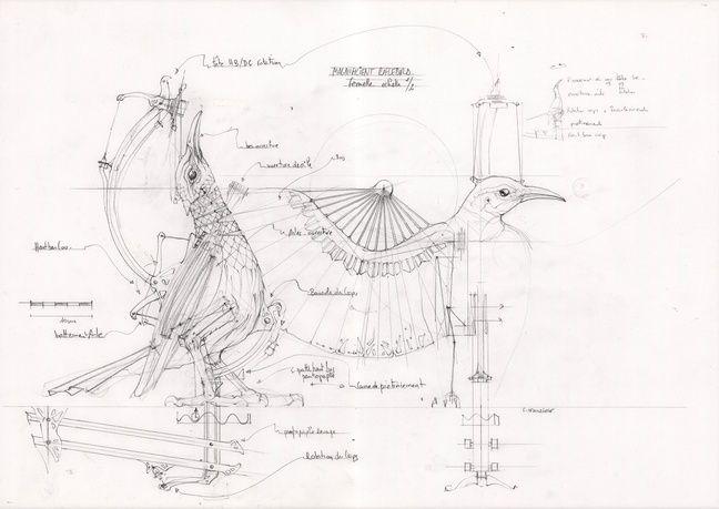 Croquis d'un des oiseaux de la parade amoureuse