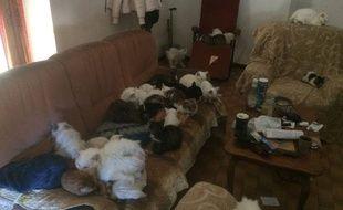 Les chats se trouvaient dans un logement à Ganges.