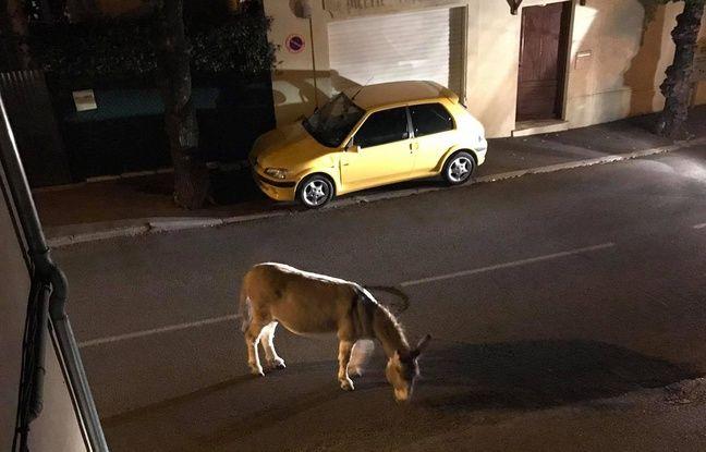 L'âne s'était échappé de son enclos de Peymenade, dans les Alpes-Maritimes.