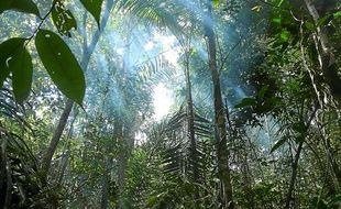 Si la forêt, comme ici au Brésil, stocke du dioxyde de carbone, elle le relâche lorsqu'elle est brûlée.