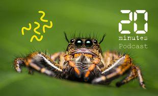 Spécimen d'araignée, parmi les 49.250 espèces recensées en 2021