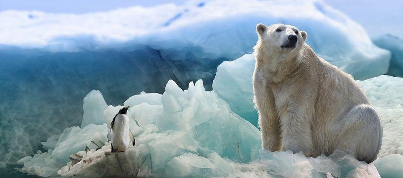 Pas la meilleure période pour être un ours polaire