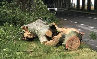 De nombreux arbres étaient à terre vendredi entre Villefranche-de-Lauragais et Villenouvelle suite aux orages.