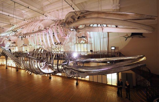 Un squelette de baleine comme un reflet