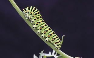 Les populations d'insectes se sont effondrées, notamment en raison de l'utilisation de pesticides.