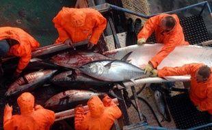Les ONG engagées dans la défense du thon rouge, l'un des grands prédateurs de Méditerranée, estiment que la pêche illégale de ce poisson très prisé des Japonais a diminué mais est toujours une réalité et réclament un renforcement des contrôles tout au long de la chaîne commerciale.