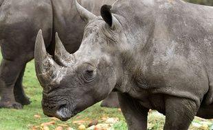 Illustration d'un rhinocéros dans un zoo.