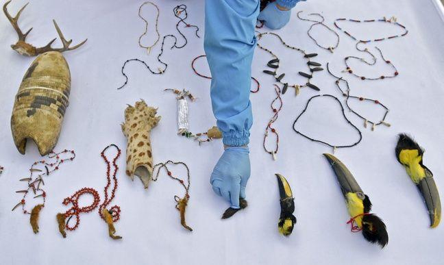 Les autorités colombiennes dressent l'inventaire de ces objets liés à des rites païens.